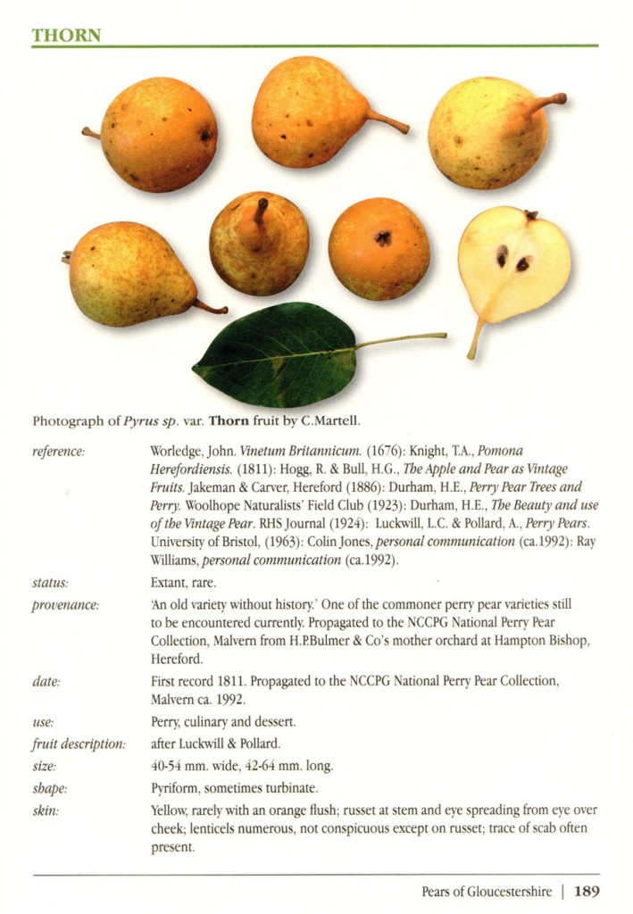 Thorn pear in Martell's Pears of Gloucestershire and Perry Pears of the Three Counties, 2013.